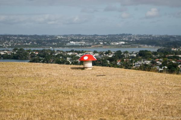 One mushroom