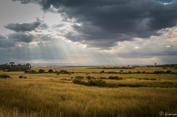 #2 Masai Mara