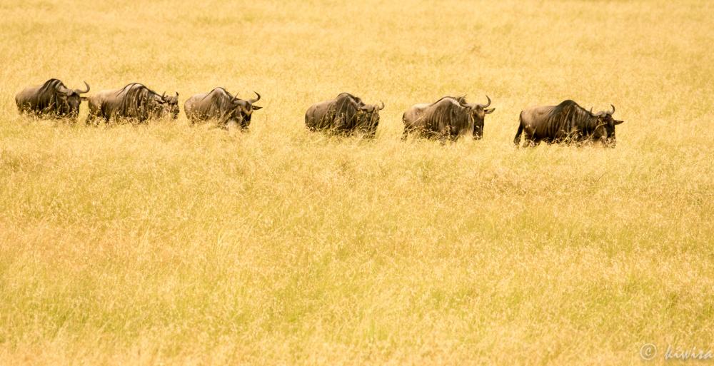 #3 Masai Mara