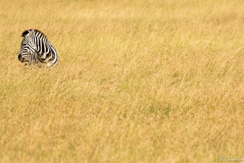 #4 Masai Mara