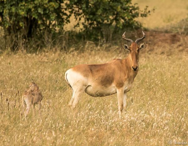 #5 Masai Mara