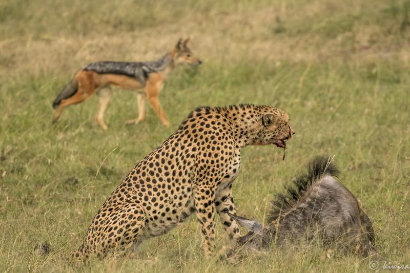 #6 Masai Mara