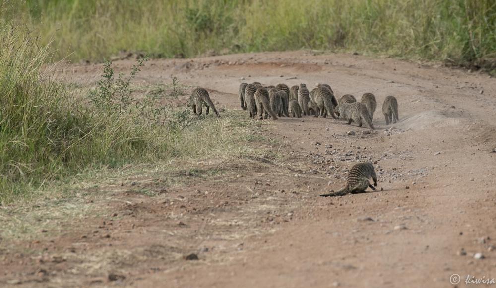 #7 Masai Mara