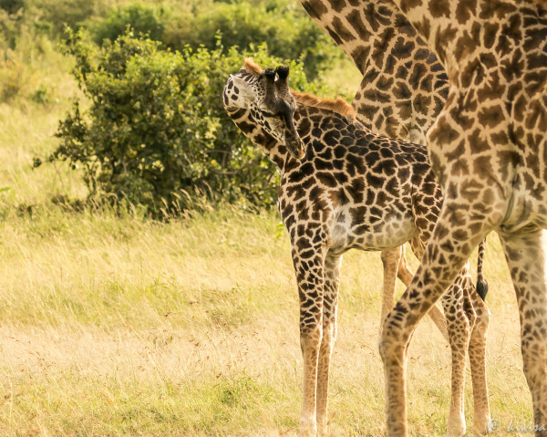 #10 Masai Mara