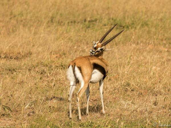#9 Masai Mara