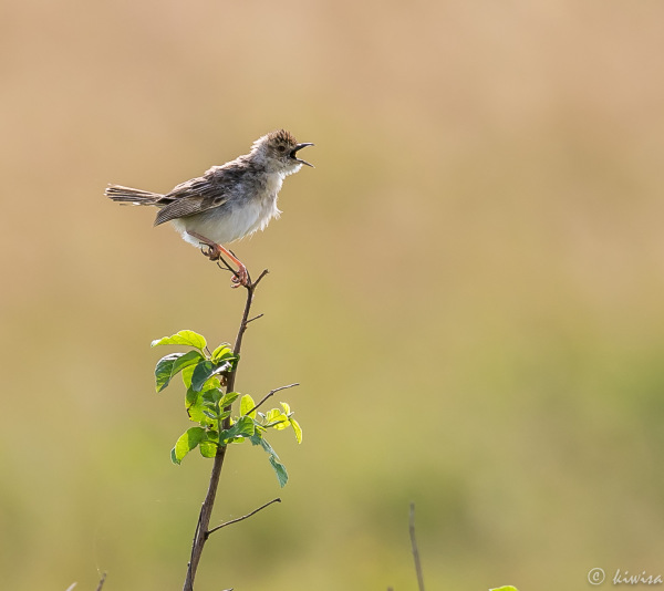 #1 Birds of the Masai Mara
