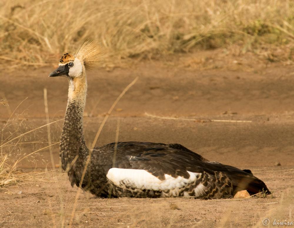 #3 Birds of the Masai Mara