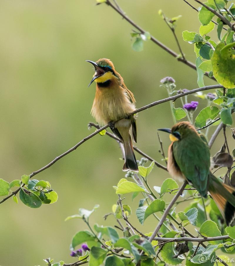 #5 Birds of the Masai Mara