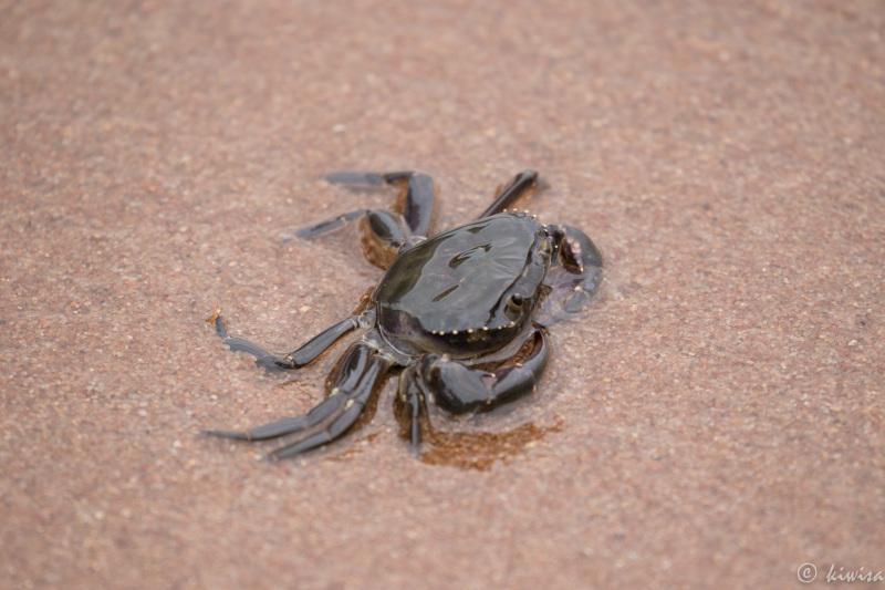 #3 Mwanza, Tanzania - Lake Victoria Crab