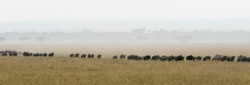 #8 Serengeti  - Wildebeest everywhere