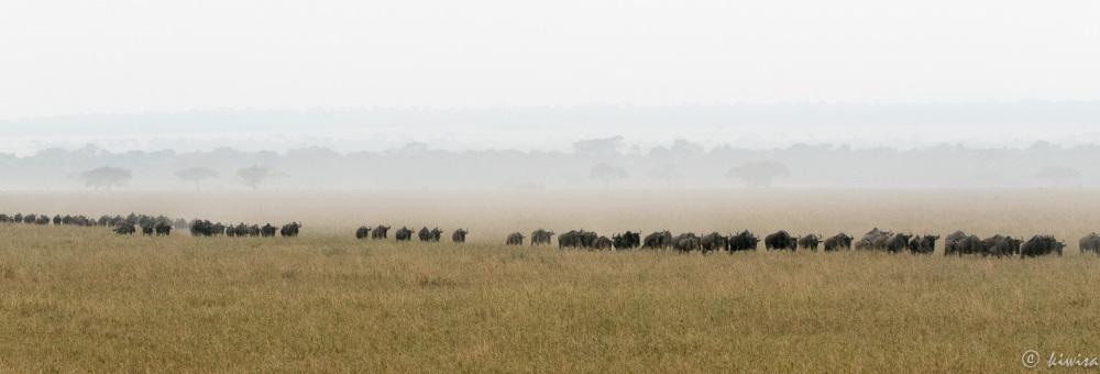 #8 Serengeti  - Wildebeest everywhere