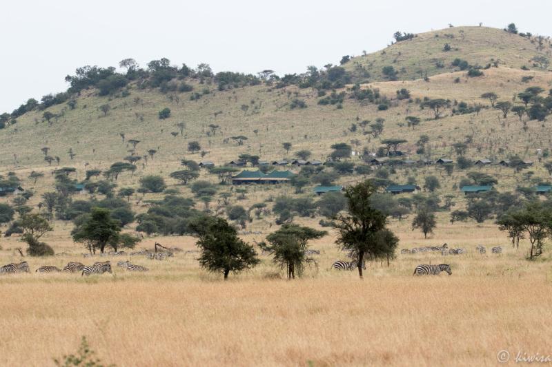 #23 Serengeti  - Kiota Camp