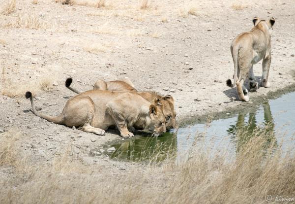 #33 Serengeti  - Family of three