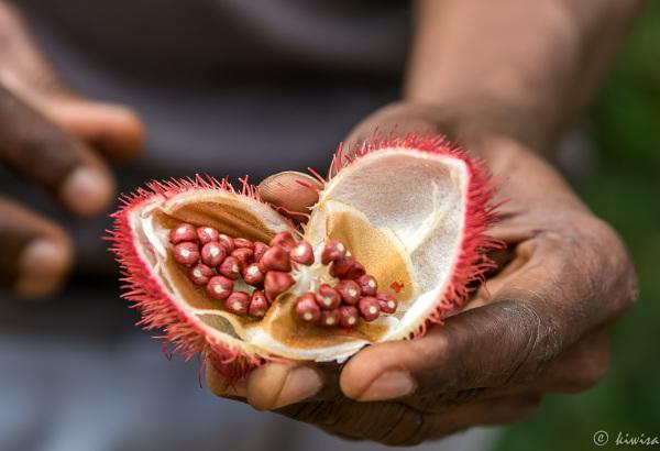 #11 Zanzibar- 1 Spice Farm Tour
