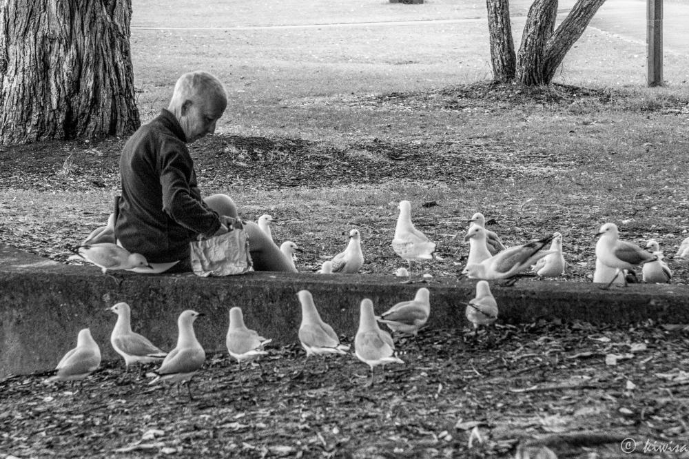Feed he birds