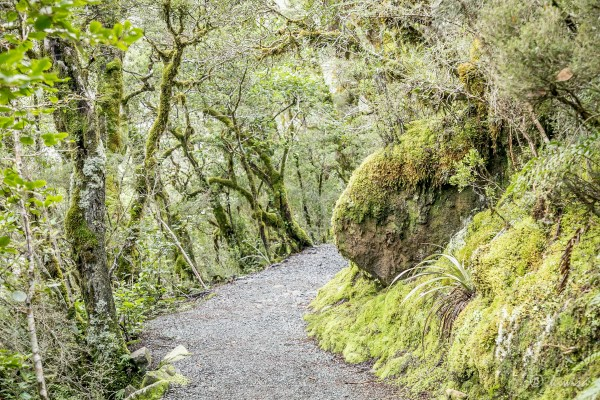 #31 SI Road trip- Arthurs Pass walking track