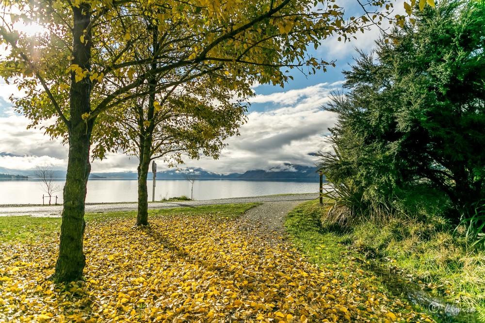#55 SI Road trip- Lake Hawea autumn leaves