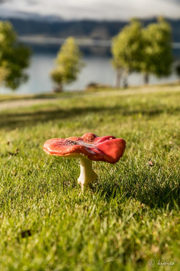 #56 SI Road trip- Lake Hawea mushroom