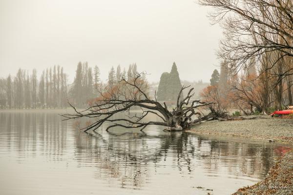 #62 SI Road trip- Lake Wanaka