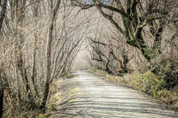 #75 SI Road trip- Glenorchy walkway