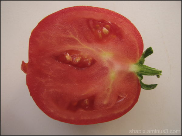 ANATOMY of TOMATO