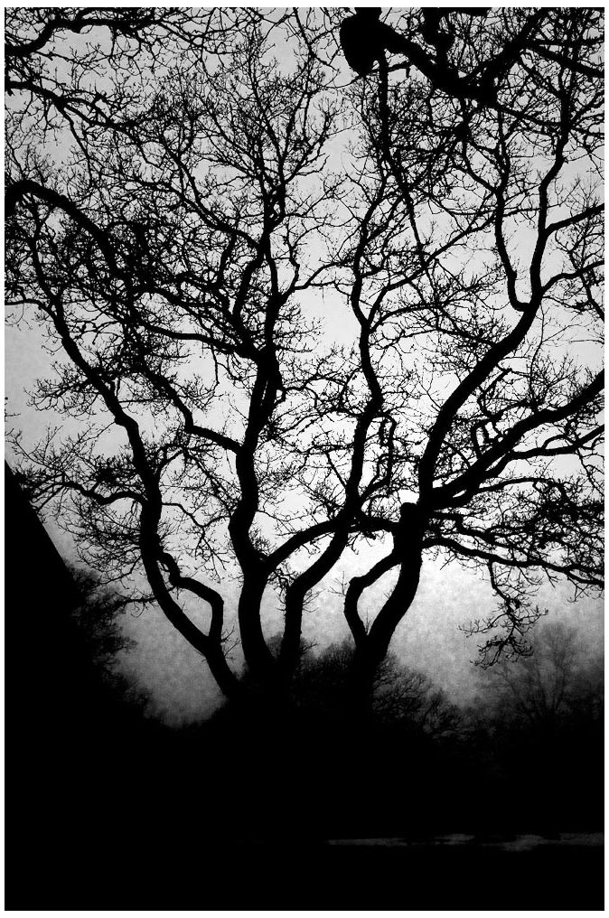 Tree siluette