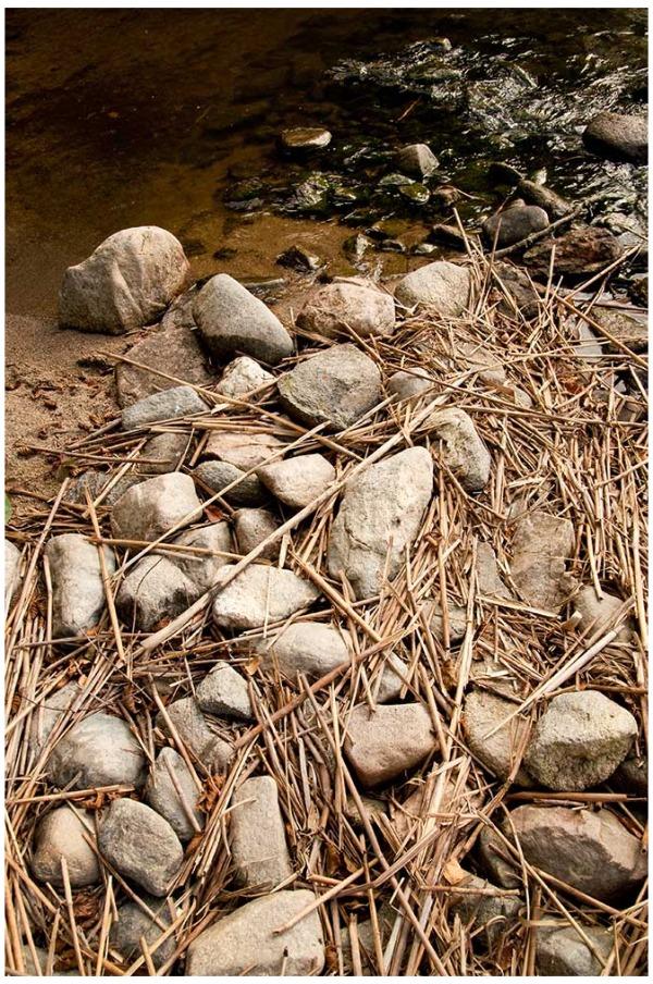 Phragmites australis and sand