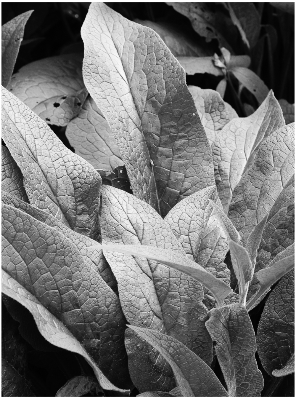 Plant in silver light