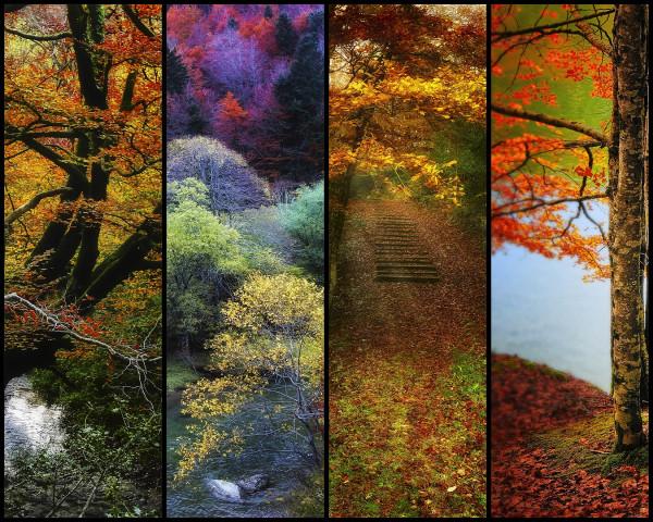 slices of autumn beauty