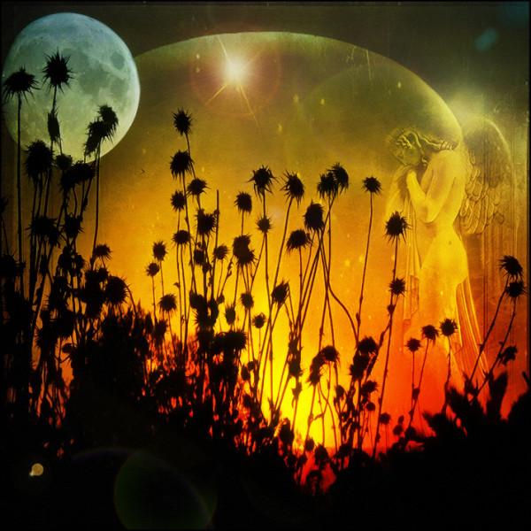 day and night photomanipulaton