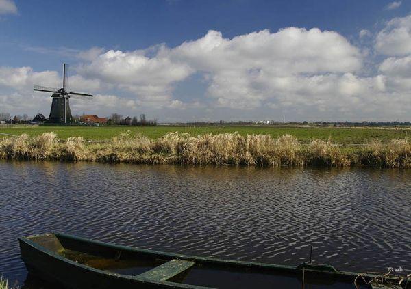 Weijenbus (2) Uitgeest (Noord-Holland)