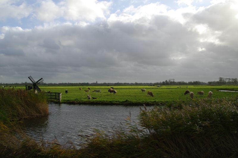 Eilandspolder,  Graft  (Noord-Holland)
