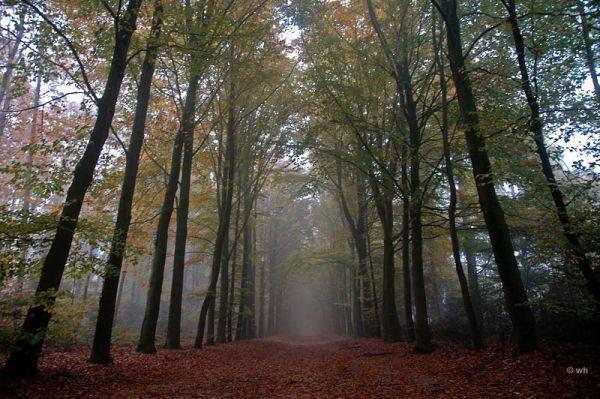 Fall, Oosterbeek (Gelderland)