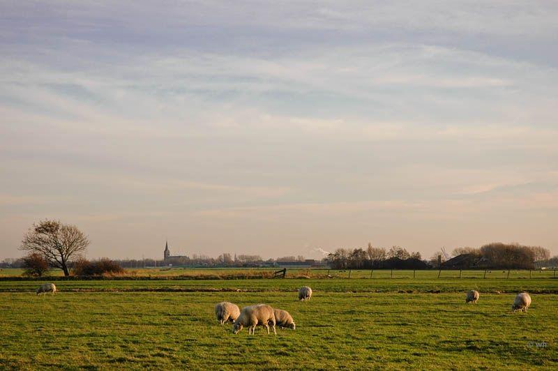 Assendelft (Noord-Holland)