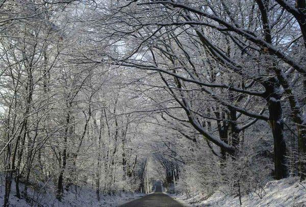 Wolfheze (Gelderland)