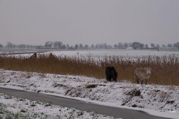 Hoogwoud (Noord-Holland)