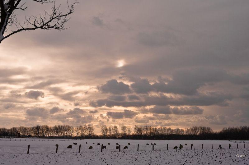 Dirkshorn (Noord-Holland)
