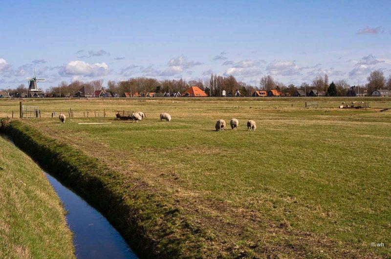 Koedijk (Noord-Holland)