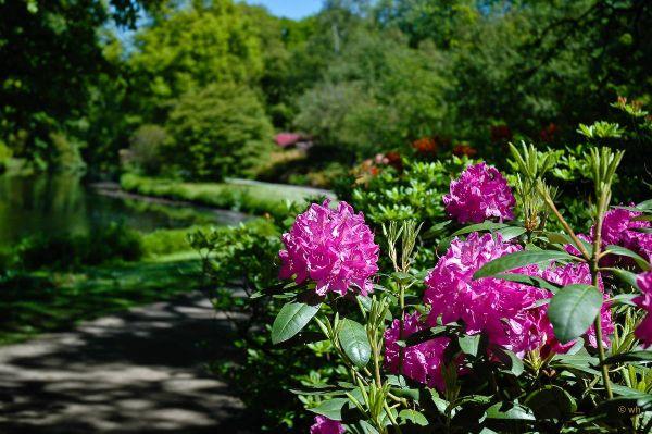 De Japanse tuin,  Den Haag  (Zuid-Holland)