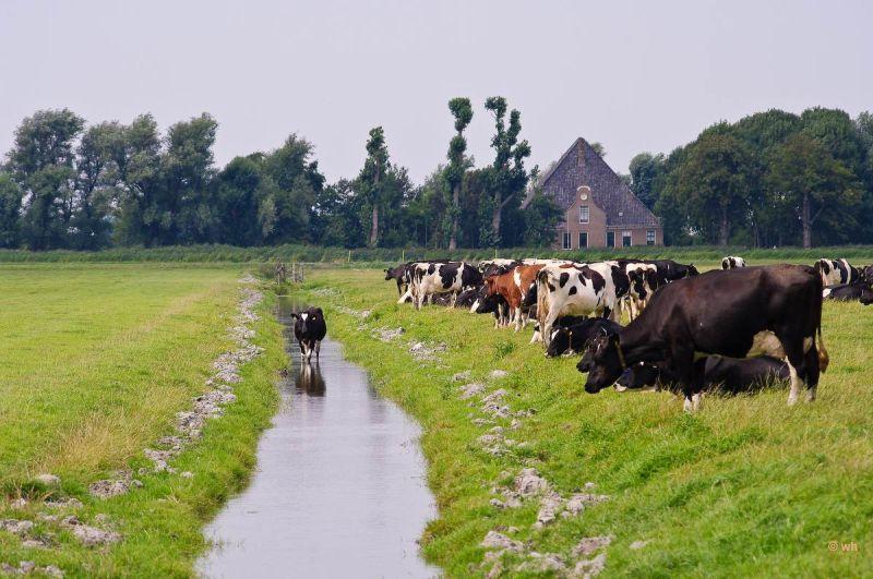 De Beemster  (Noord-Holland)