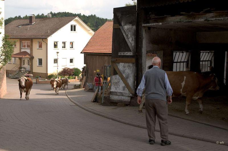 Op weg naar de stal