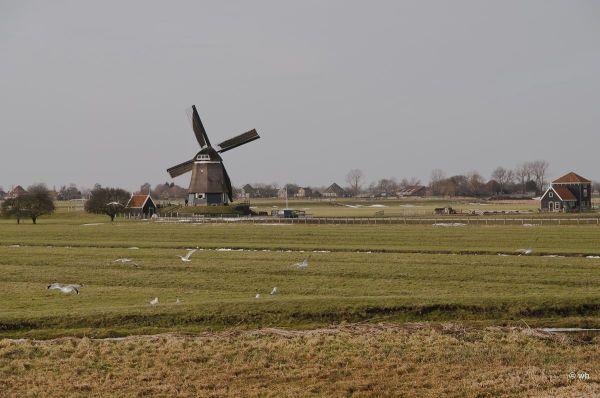 Zeevang  (Noord-Holland)