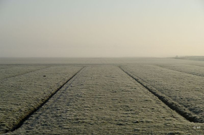 Berkmeer met haas  (Noord-Holland)
