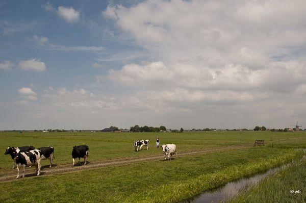 Roode polder, nabij Leiden  (Zuid-Holland)