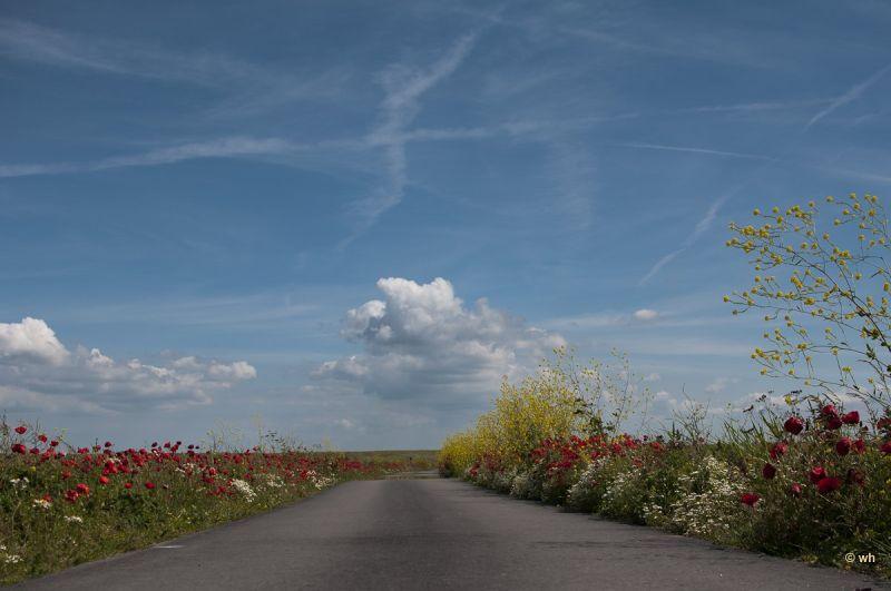 De putten  (Noord-Holland)