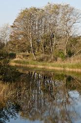 Amsterdamse-waterleidingduinen   (Noord-Holland)