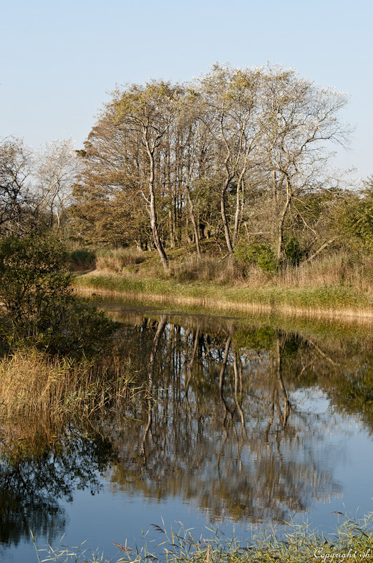 Amsterdamse-waterleidingduinen   (Noord-Holland)