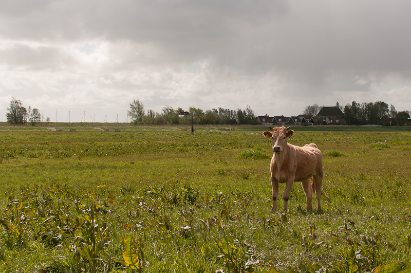 Schardam  (Noord-Holland)