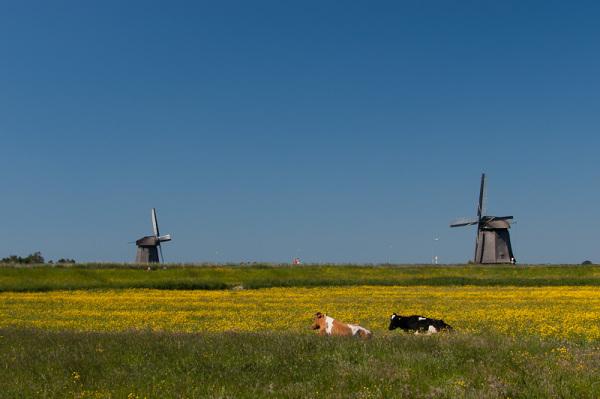 De Schermer Polder  (Noord Holland)