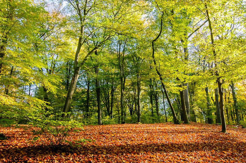 Maasbergse bos,  Schaarsbergen  (Gelderland)